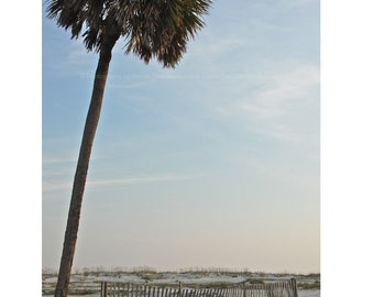 Palm Tree on the Beach Photograph