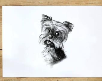 Black and white pet portrait *digital file*
