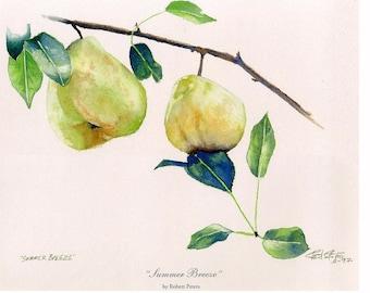 11 x 14 Pear watercolor print. Kitchen art, pear art, botanical print. Green pears, cooking pears.
