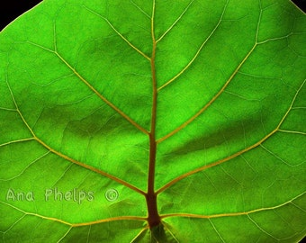 Tree in a green leaf. Fine Art Photography.