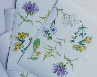Ontario wild flowers stickers sheet of 6
