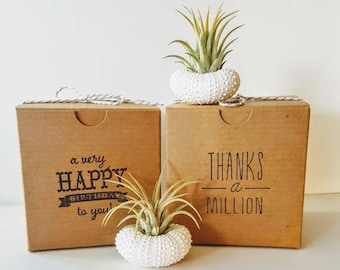 Two Air Plants in Hand Painted White Urchin Shells, Stamped Gift Boxes, Unique Gift