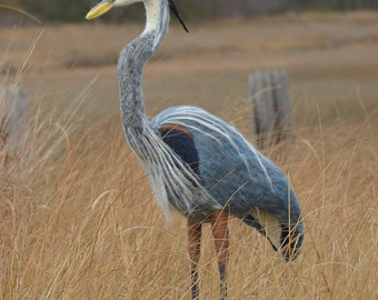 Great Blue Heron lifesize needle felted handmade wool bird