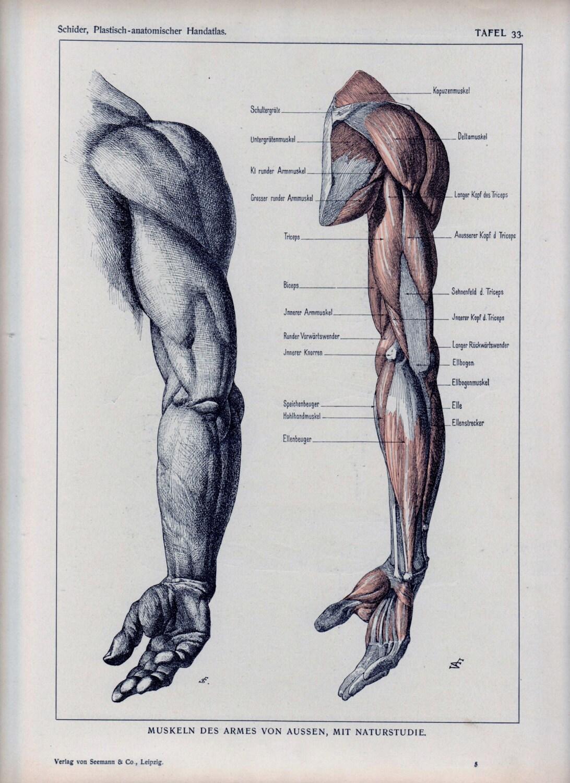 Auténtico 1898 anatomía libro página brazo expuesto músculos ...