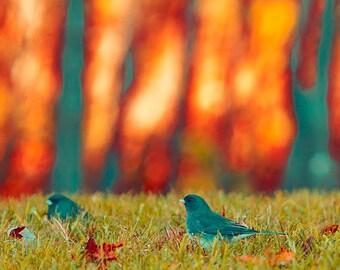 Rustic Wall Art Print of Birds, Nature photography, Orange, Gray, Green