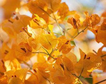 Yellow Flower Photography - Yellow Bougainvillea - Fall Colors - Sunshine Yellow - 5x7 Fine Art Photograph