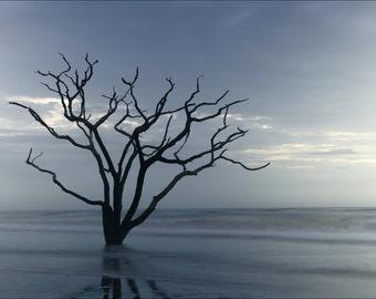Botany Bay Photograph // The Boneyard //Edisto Island // South Carolina Low Country // Dead Tree in Ocean // Photograph in Shades of Blue