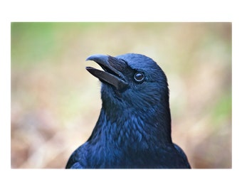 Colour Crow Head A4 Print
