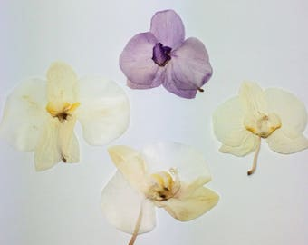 Dried Pressed Orchids/ Flowers / Botanicals. Dried Pressed Phalaenopsis/Moth Orchids.
