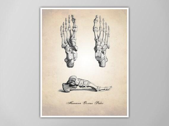 Menschliche Anatomie Fuß Kunstdruck menschliche Anatomie Füße