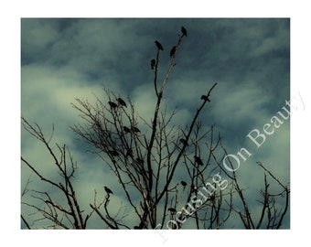 Download Crow Print / Crow Photography / Digital Crow Art / Download Wall Art / Green Wall Art / Digital Art Print / Download Print / Art