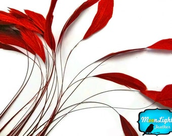 Red Feathers, 1 Dozen - RED Stripped Coque Tail Rooster Feathers: 318