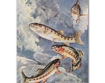 "Fly Fishing Print, 1930s Fishing Wall Art, Vintage Trout Fish Art --- Golden Trout"" No. 269"