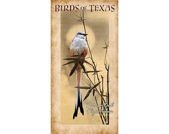Birds of Texas, Scissortail Flycatcher