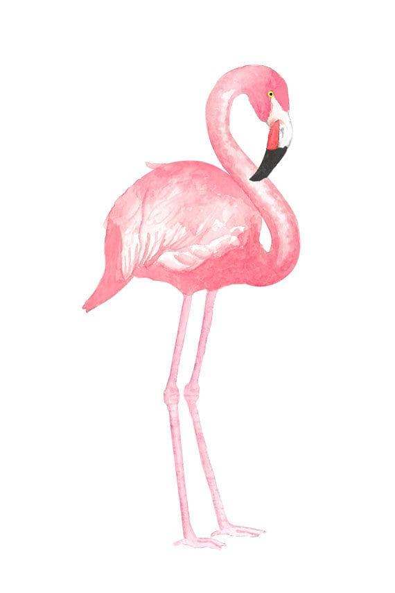 watercolor flamingo clipart tropical bird illustration rh etsy com flamenco clipart flamingo clip art free funny