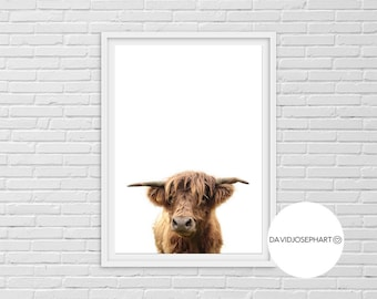 Highland Cow Print, Highland Calf Print, Highland Bull Print, Printable Decor, Farm Wall Art, Cattle Photography, Digital Download