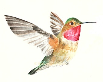 Hummingbird Print, Watercolour Hummingbird, Bird Art, American Bird Print, Bird Wall Print, Art for Home, Art for Office, Flying Hummingbird