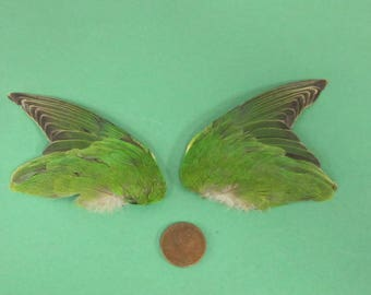 Green Pair Fanned Dried Birds Wings Feathers Art Craft Taxidermy Shipping Included