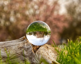 Magnolia Tree with Lens Ball Print