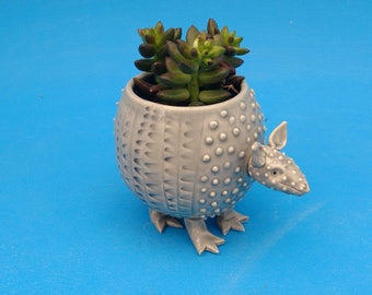 Small Armadillo Planter, Succulents, Air Plants