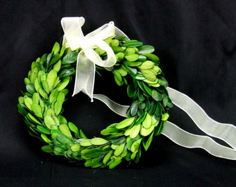 Boxwood 6 Inch Preserved Natural  Wreath with Organza Ribbon
