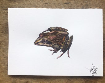 River Frog Painting