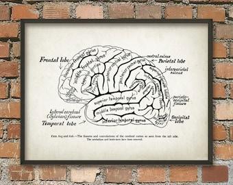 Gehirn Sie Anatomie Print - kognitive - Computational - Neurowissenschaften - Neurolinguistik Wand Kunst Poster - menschliche Gehirn Anatomie Wissenschaft Poster