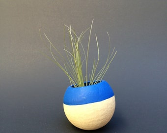 Air Plant Pod - blue top