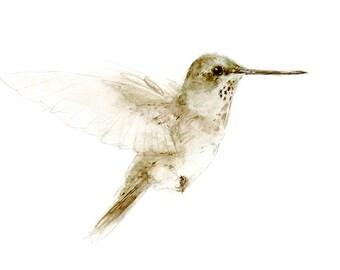 Archilochus-alexandri watercolor painting - bird watercolor painting - 5x7 inch print - 0118