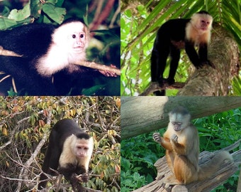 Lot Of 4 Capuchin Monkey Fabric Panel Quilt Squares