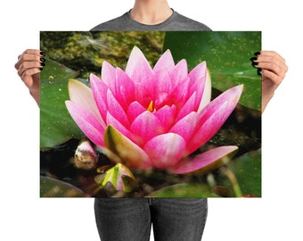 Pink Lotus Flower, Photo Print, Poster Print, Waterlily Flower, Pink Lotus, Mother's Day Gift, Gift for Mom, Pink Wall Art, Pink Home Decor