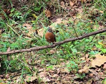 Sweet little bird waiting on a branch