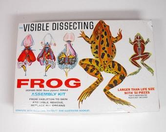 Visible Dissecting Frog Model Kit - Unbuilt    (933)