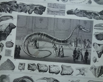 FOSSILS print original 1849 antique illustration old pictures of shell shells sea serpent cretaceous period vintage small poster prints