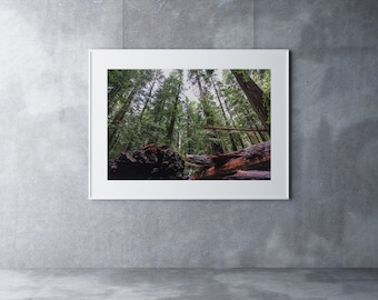 Mowhawkee in the Redwoods, USA - Wall Art, Poster, Best Selling Items, Home Decor, Wall Decor, Printable Wall Art, Art Prints, Photography