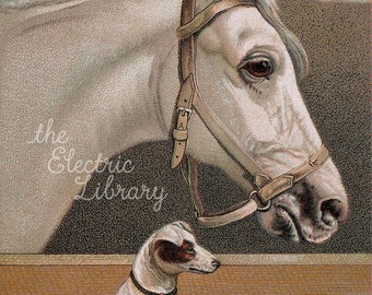Stable Buddies Digital Download: A White Horse and a Fox Terrier are Best Friends