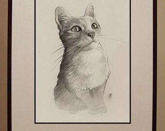 Custom graphite pencil pet portrait.