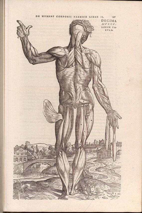 8 Rare Antique Anatomy Books Andreas Vesalius from 16th to