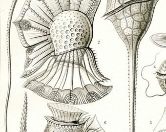 Plankton Drawing, Marine Science, Marine Plankton, Drawing Plankton, Science Drawing, Plankton Marine, Marine Drawing, Plankton Science, Art