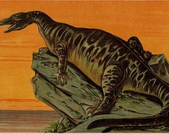 "Matted Antique Dinosaur Print  ""Iguanodon"" C. 1890's Extinct Animal Paleontology Reptile 11x14"""