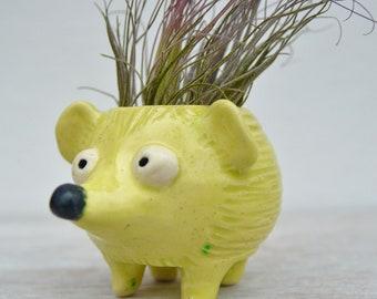 Hedgehog Planter / Air Plant Holder