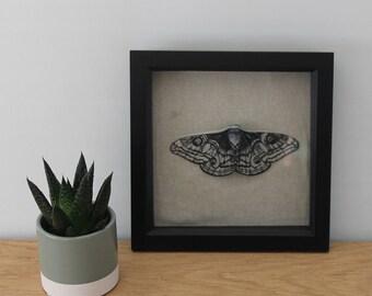 Paper Moth Enotmology - Saturnia Pavonia - Emperor Moth - Paper Sculpture