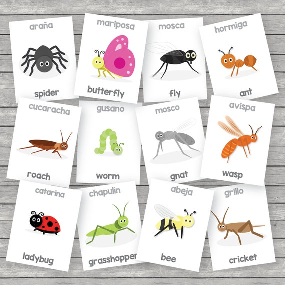 List Of Synonyms And Antonyms Of The Word Insectos En Ingles