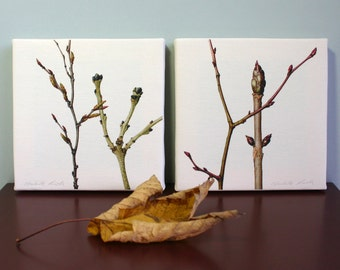 Winter Branches Canvas Prints