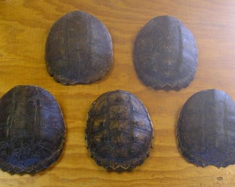 5 Snapping Turtle Shells