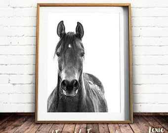 Black and White Horse Print, Horse Photo, Horse Poster, Equine Print, Horse Decor, Wild Horse, Printable Art, Instant Download