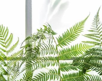 Botanical Print, Green Ferns, Leaf Photograph, Nature Art, Greenery, Modern Wall Art, Home Decor, Spa Art, Bed Decor, Bath Art, Office Art