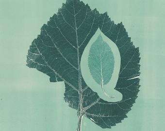 Growing Leaf Print
