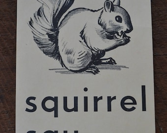 Vintage 1950s Educational Ephemera Scrapbooking Large Picture Print Flash Card - Squirrel Animal
