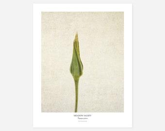 Botanical Art Poster - Flower Photography Art Print - Wildflower Wall Decor - Framed Flower Print - Farmhouse Wall Art